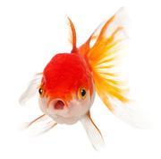 Aquarium,  Reptile,  Amphibian and Crustacean Supplies Online