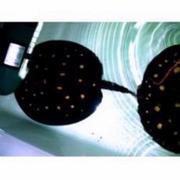 Marine leopodi stingrays p13/14 for sale