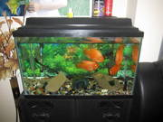30 Gallon tank with filter Free For A Good Home
